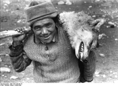 Caçador.de.Lobos.Tibet